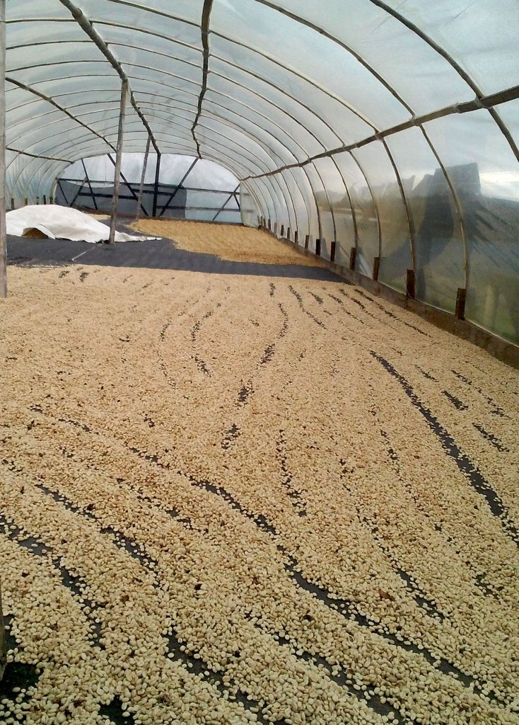 syndicate espresso colombia la piramide drying beans