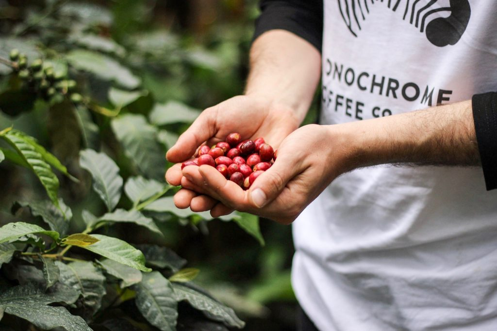 monochrome coffee co coffee cherries